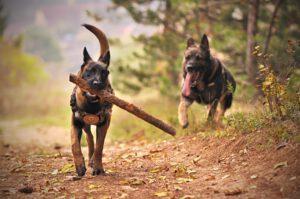 Kennelliitto ryhtyy toimiin koirien